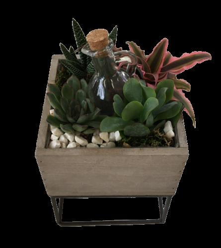 Raised Succulent Box