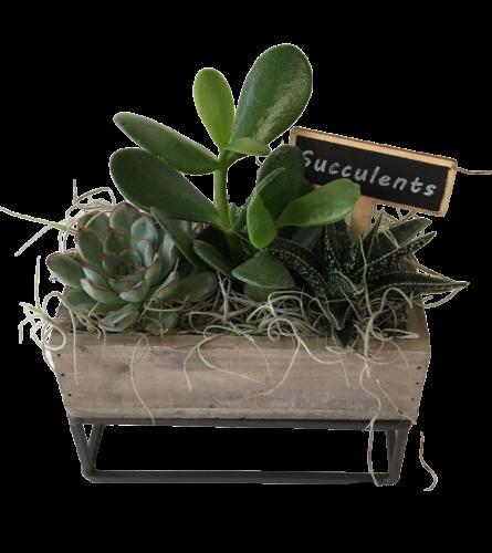 Raised Rectangular Succulent Box