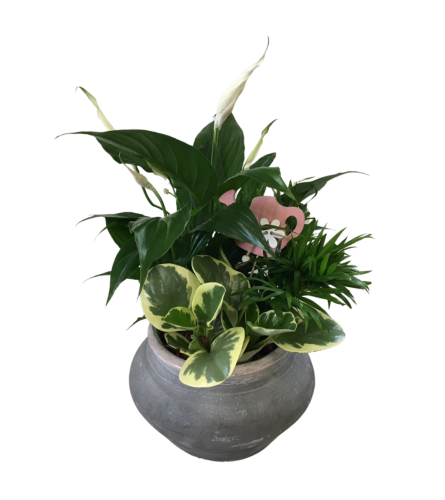 Black Terracotta Peace Lily Planter