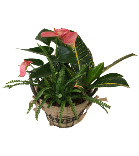 Anthurium Wire Flower Basket