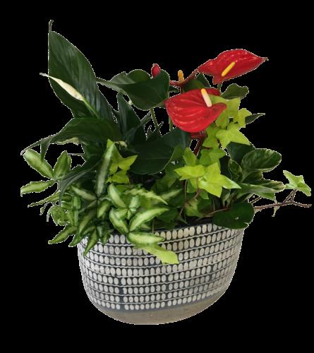 Denim Anthurium Planter