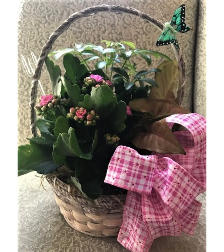 Small Basket of Plants