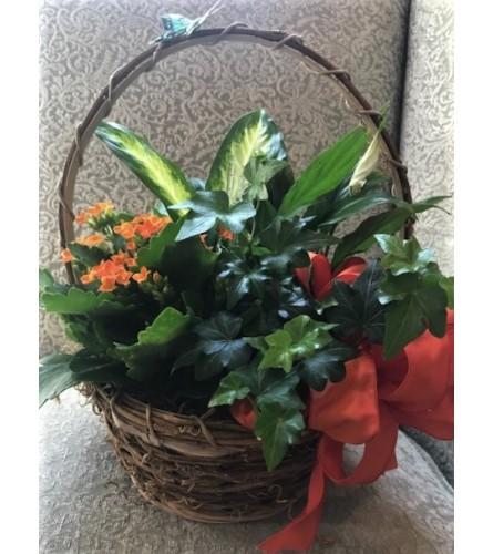 Medium Basket of Plants