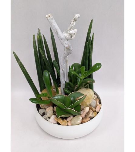 Small Succulent Planter in White Ceramic
