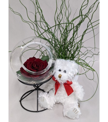 Endless Love with Red Rose and Teddy Bear