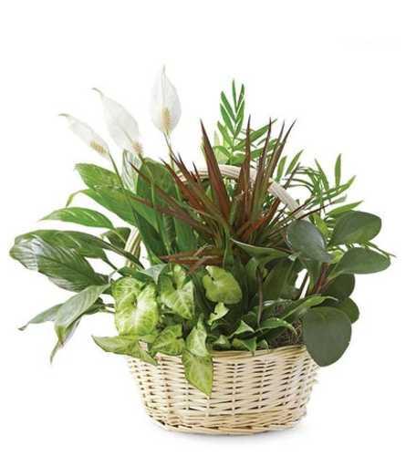Garden Green Planter