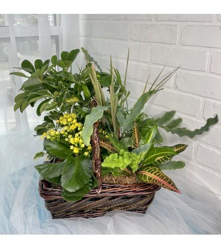 Wicker Basket Tropical Garden