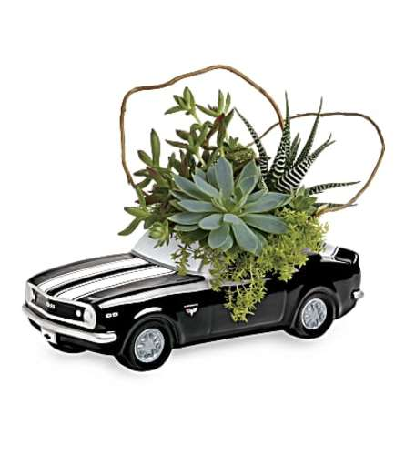 Chevy Black Camaro plant garden