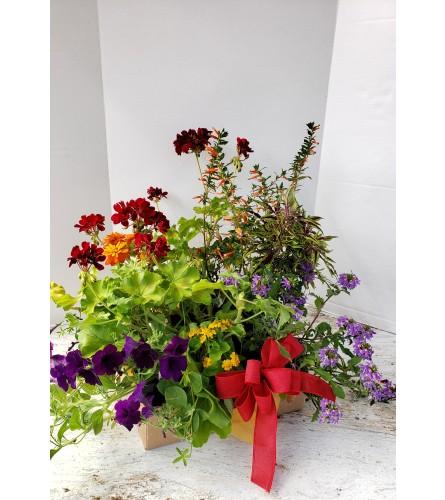 Box of Annuals