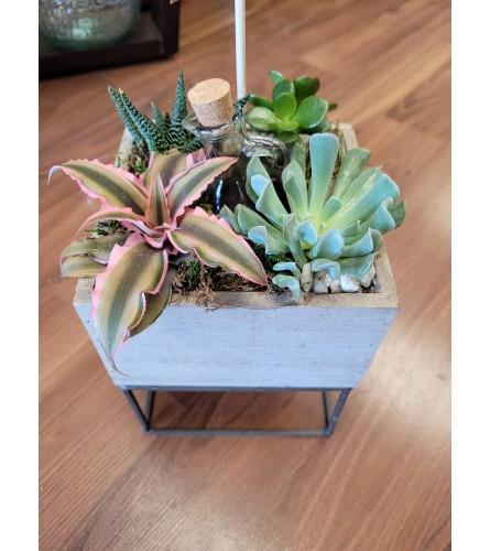 Succulent square planter
