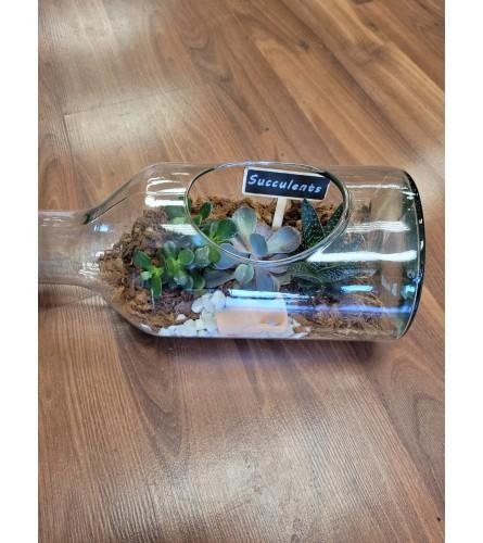 Succulent in bottle