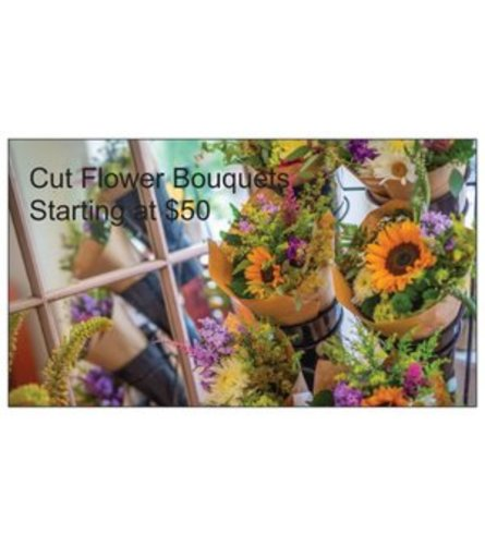 Designer Choice Cut Flowers