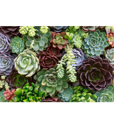 ASSORTED SUCCULENTS PLANTED IN CONTAINER