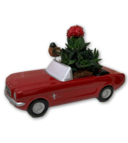 Cacti in a red Mustang