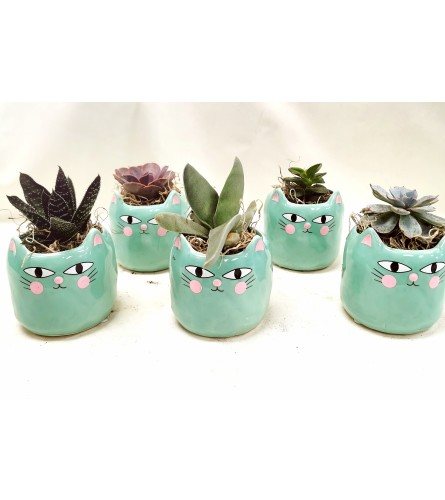 Individual Mini Kitty Succulent Pot