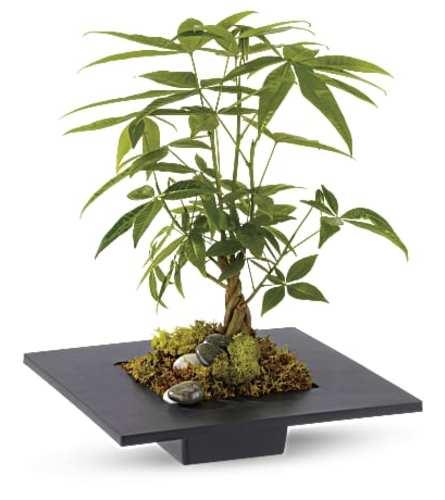 Harmony Money Tree
