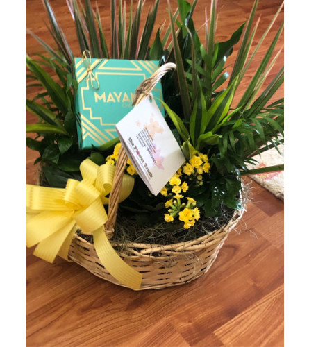Plant with Candy for Office or Home
