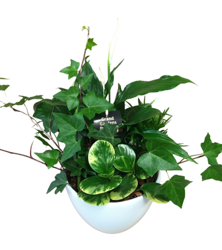 indoor peace lily planter
