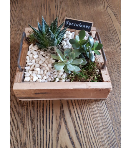 Rustic Wooden Succulent Tray