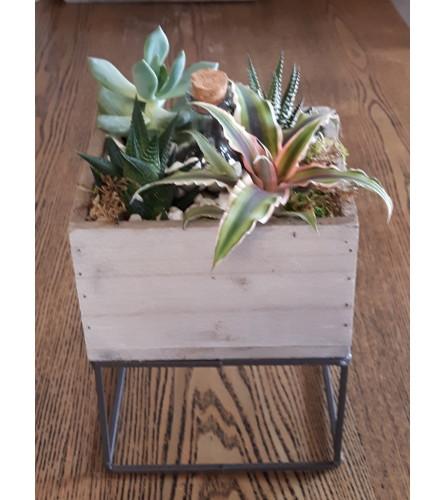Rustic Raised Succulent Box