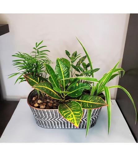 Mixed Garden planter