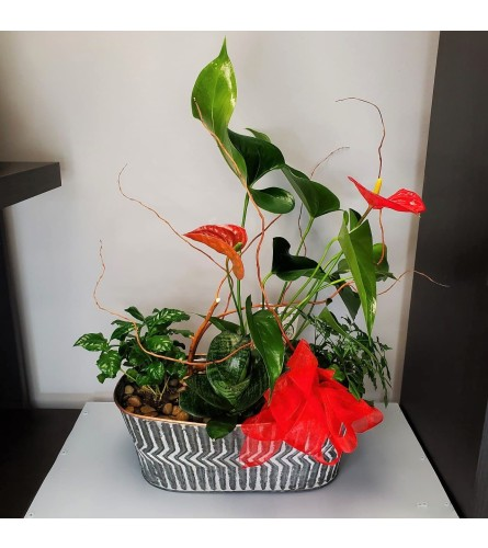 Anthurium and Greens