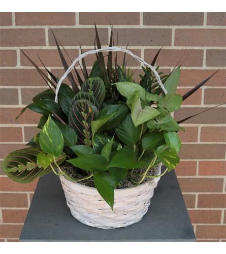 Woodchip Basket Dish Garden