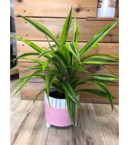 Tropical plant in footed vase