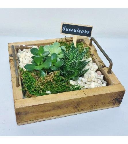 Sue's Succulent Dish