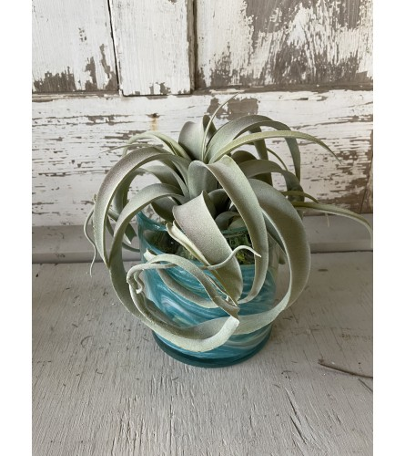 Wave Pool Silk Succulent Vase Arrangement
