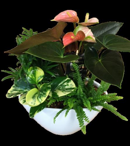 Assorted tropical Planter