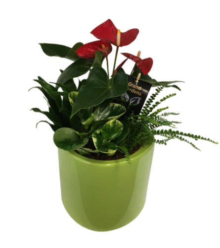Ceramic Round Green planter with Anthurium