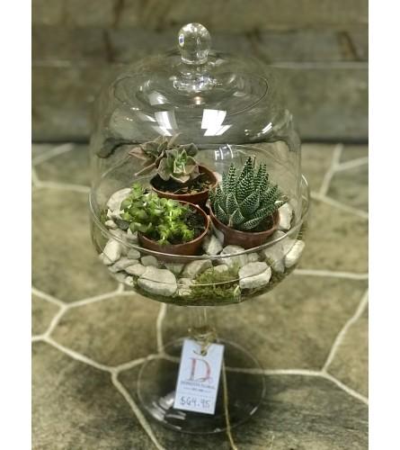 Donato's Succulent Terrarium