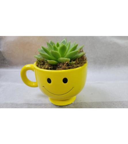Smiling Succulent