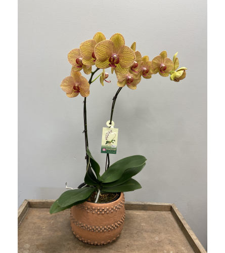 Coral Charm Orchid Planter
