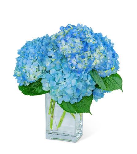 Hydrangeas In Blue