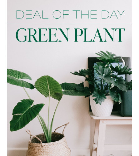 Bella's Green Plant Deal of the Day