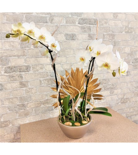 Elegante orchids by O'Flowers