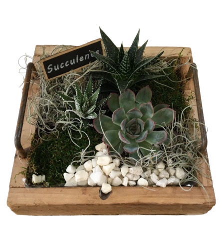 Succulents in decorative wooden container