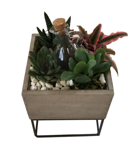 Succulents in a raised box