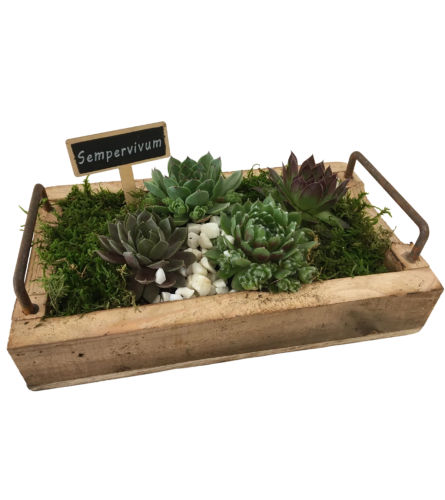 Wooden Tray with Hens & Chicks