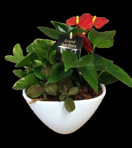 Anthurium Planter Garden