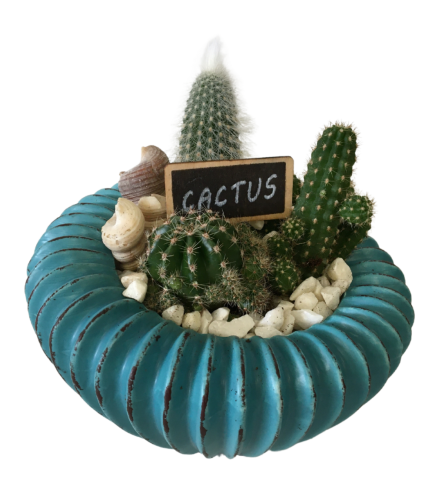 Topsy Turvy Cactus