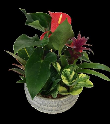 Jake Anthurium Planter