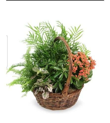 garden willow basket