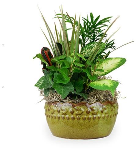 Tribute evergreen ceramic