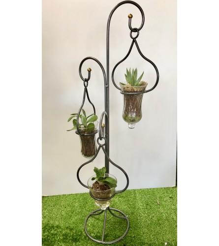 Triple Hanging Plants