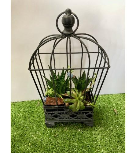 Encapsulated Succulents