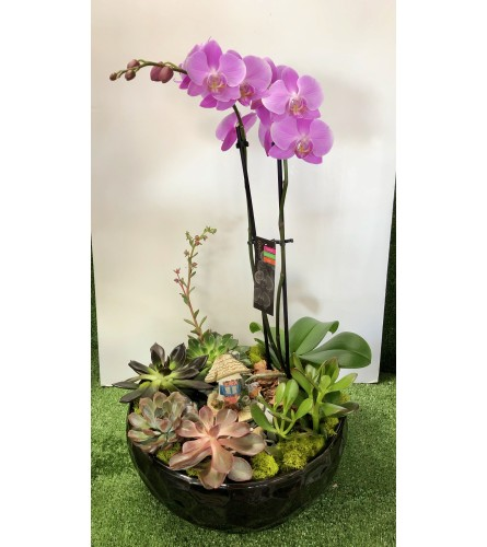 Extraordinary Orchid in Dish Garden