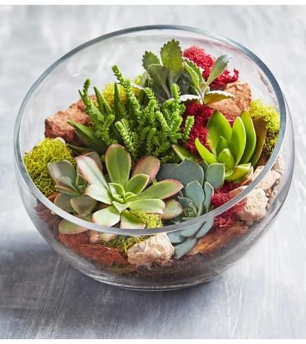 Garden of Succulents